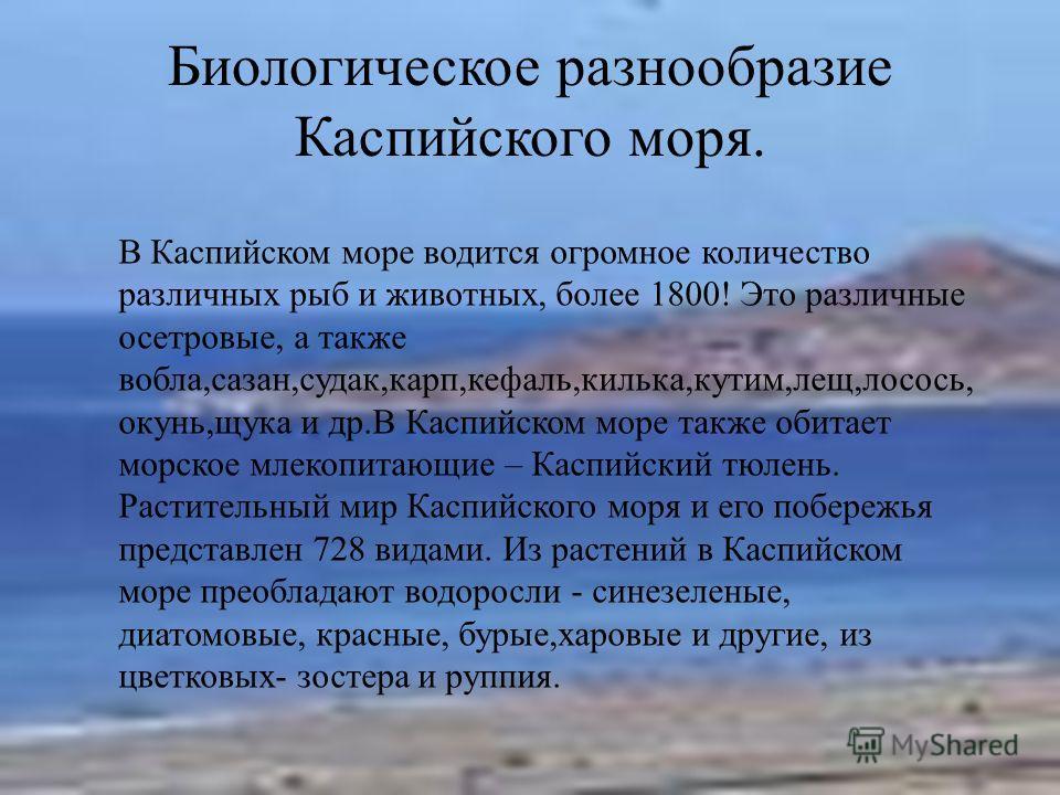 Биологическое разнообразие Каспийского моря. В Каспийском море водится огромное количество различных рыб и животных, более 1800! Это различные осетровые, а также вобла,сазан,судак,карп,кефаль,килька,кутим,лещ,лосось, окунь,щука и др.В Каспийском море