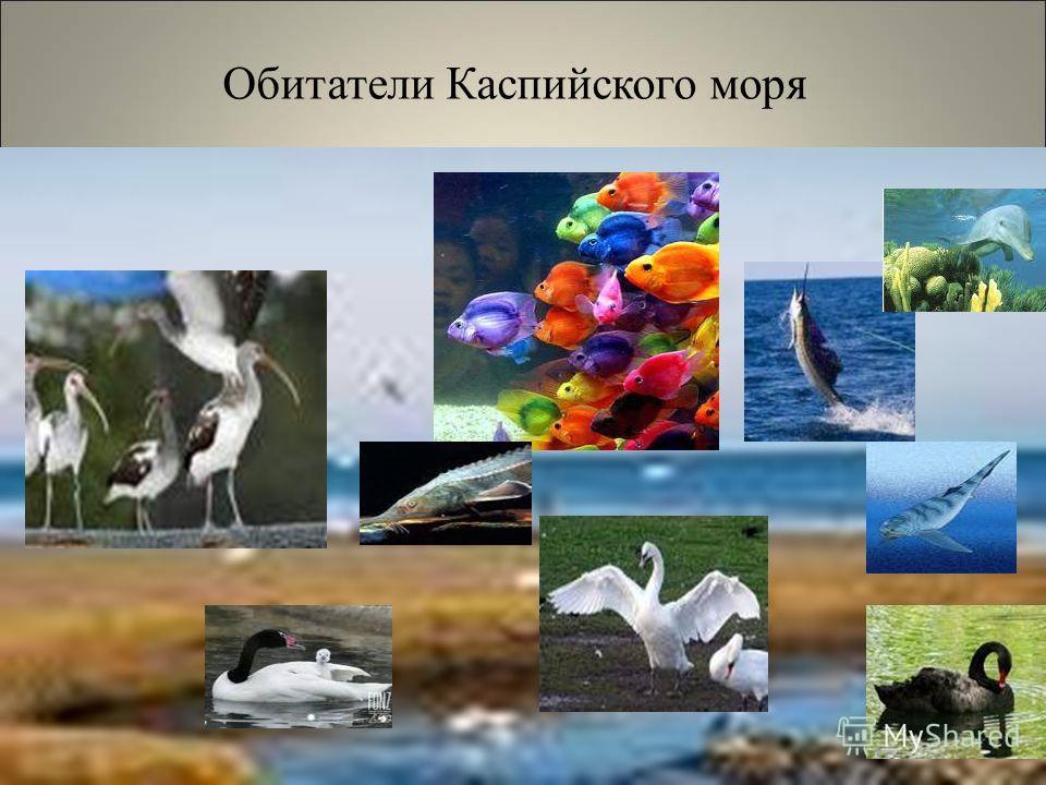 Обитатели Каспийского моря