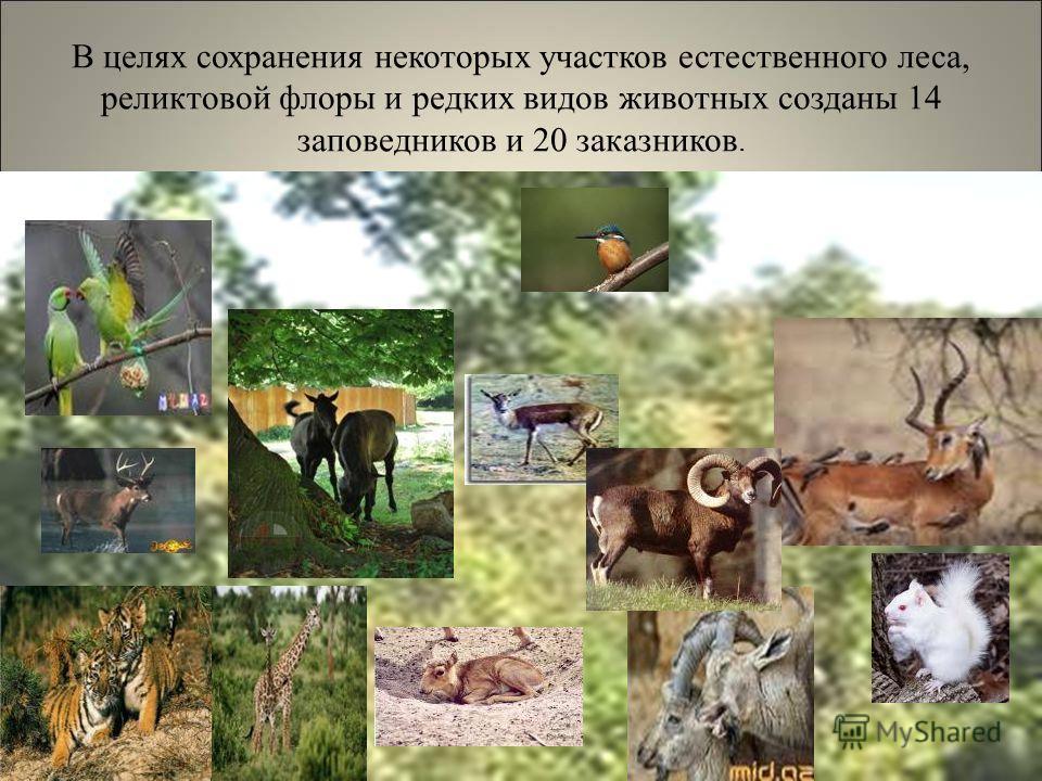 В целях сохранения некоторых участков естественного леса, реликтовой флоры и редких видов животных созданы 14 заповедников и 20 заказников.