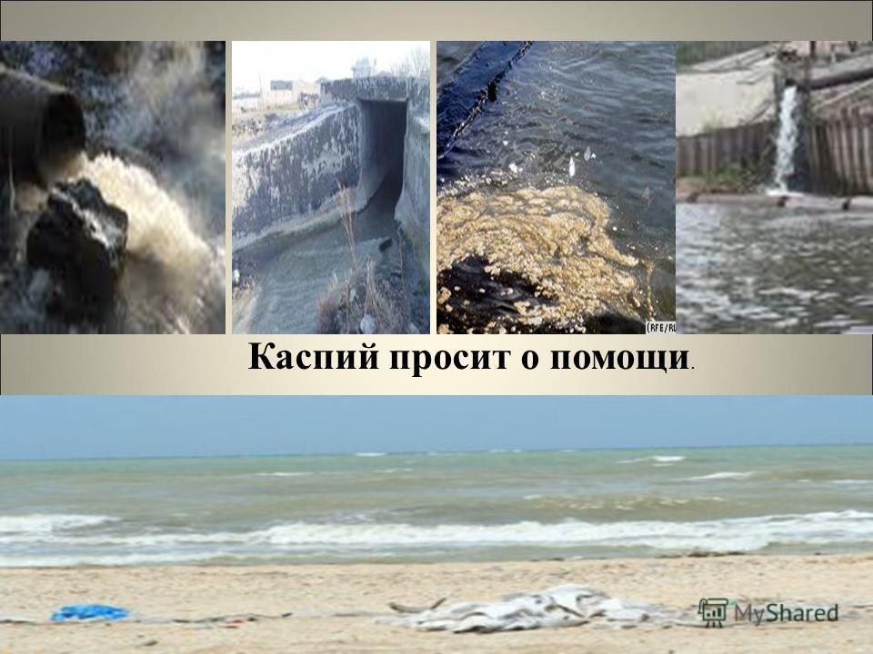 Каспий просит о помощи.