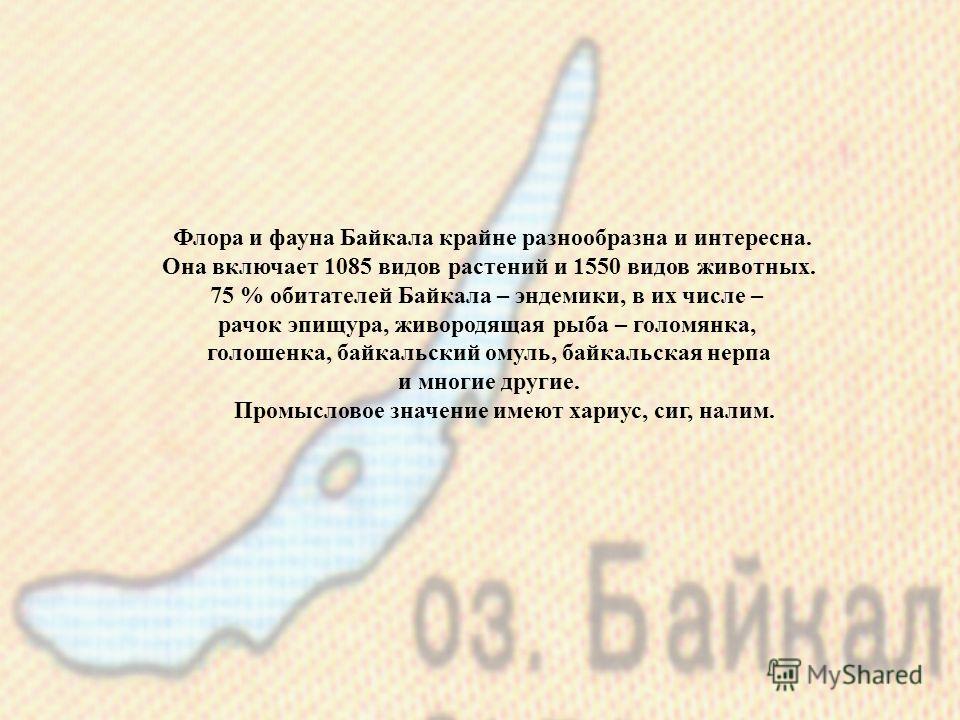 Флора и фауна Байкала крайне разнообразна и интересна. Она включает 1085 видов растений и 1550 видов животных. 75 % обитателей Байкала – эндемики, в их числе – рачок эпищура, живородящая рыба – голомянка, голошенка, байкальский омуль, байкальская нер