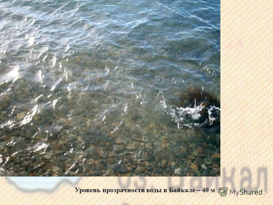 Уровень прозрачности воды в Байкале – 40 м