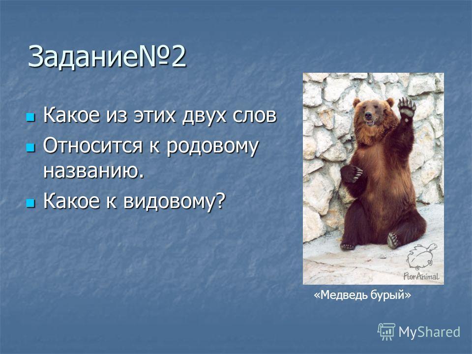 Задание2 Какое из этих двух слов Какое из этих двух слов Относится к родовому названию. Относится к родовому названию. Какое к видовому? Какое к видовому? «Медведь бурый»