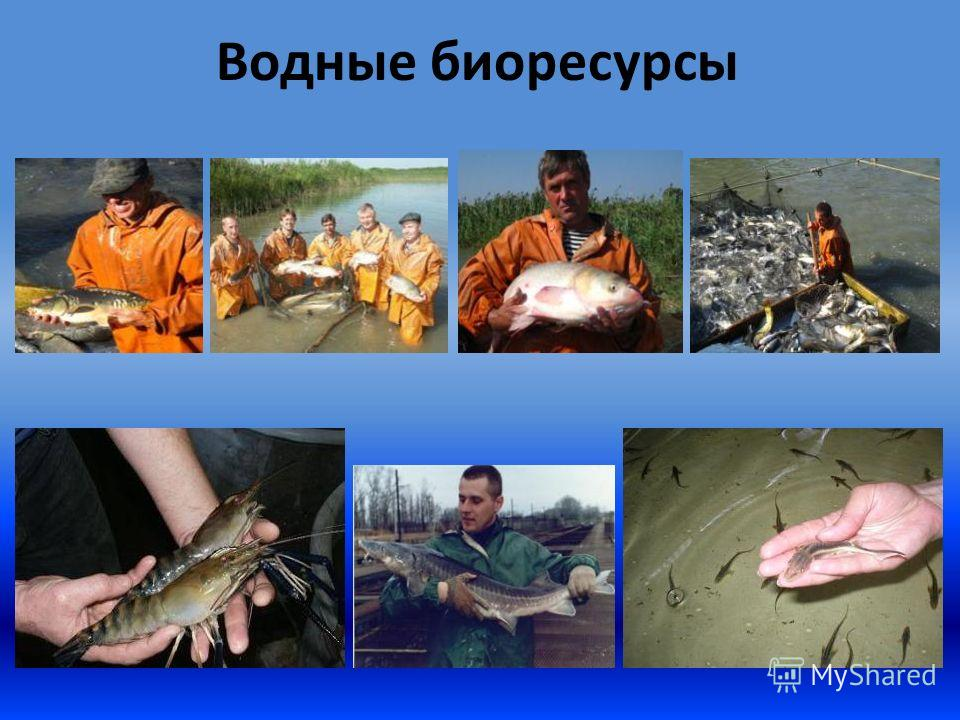Водные биоресурсы