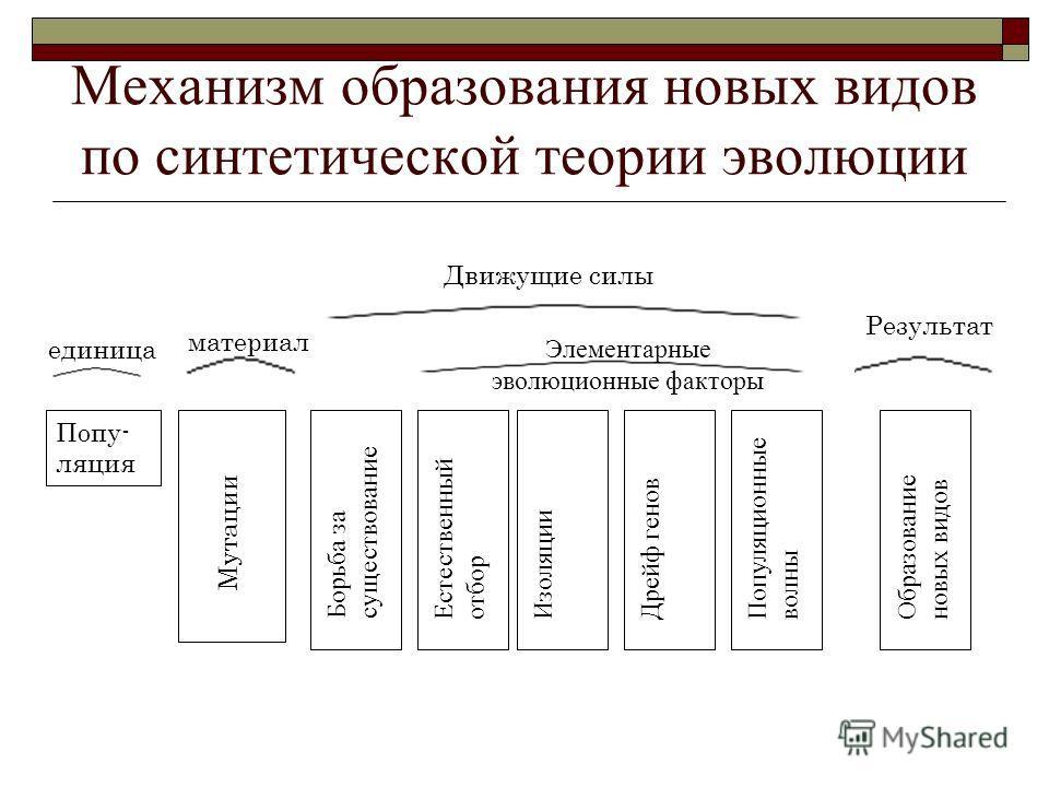 "Презентация на тему: ""Эволюция"