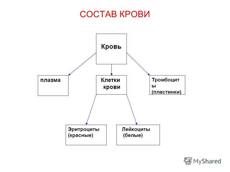 СОСТАВ КРОВИ плазма Клетки крови Эритроциты (красные) Лейкоциты (белые) Кровь Тромбоцит ы (пластинки)