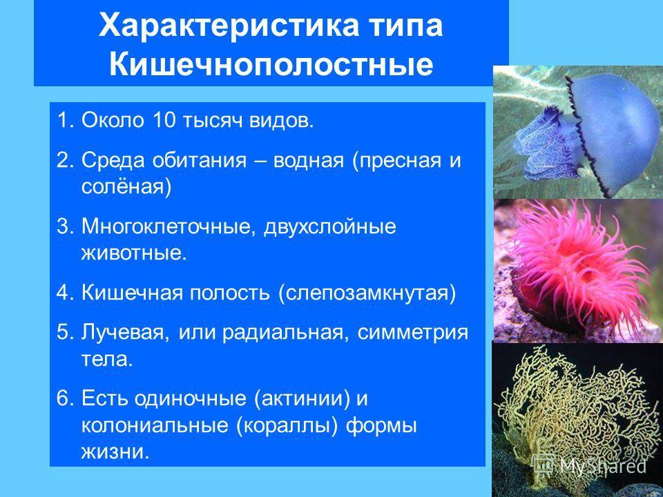 Характеристика типа Кишечнополостные 1.Около 10 тысяч видов. 2.Среда обитания – водная (пресная и солёная) 3.Многоклеточные, двухслойные животные. 4.Кишечная полость (слепозамкнутая) 5.Лучевая, или радиальная, симметрия тела. 6.Есть одиночные (актини