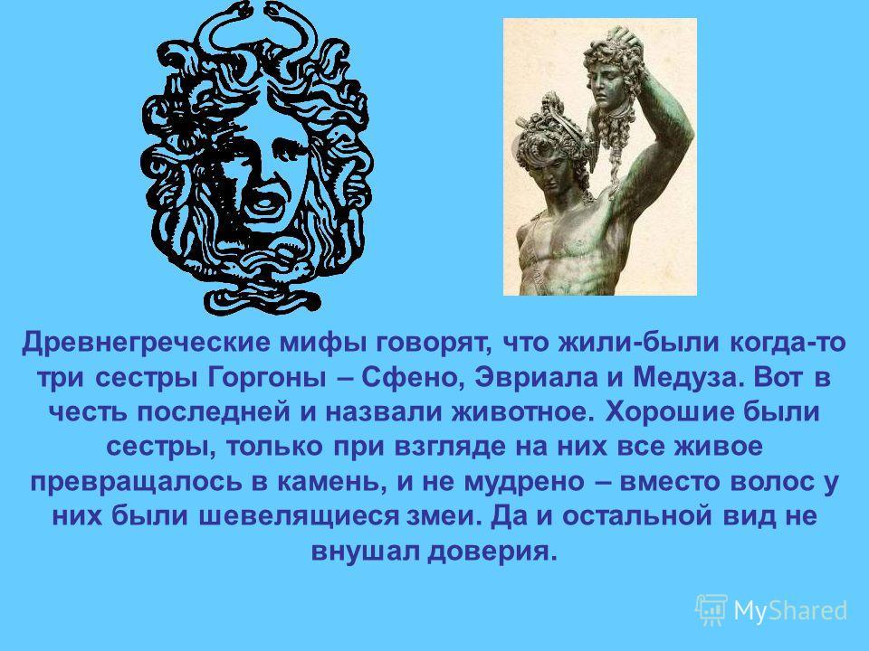 Древнегреческие мифы говорят, что жили-были когда-то три сестры Горгоны – Сфено, Эвриала и Медуза. Вот в честь последней и назвали животное. Хорошие были сестры, только при взгляде на них все живое превращалось в камень, и не мудрено – вместо волос у