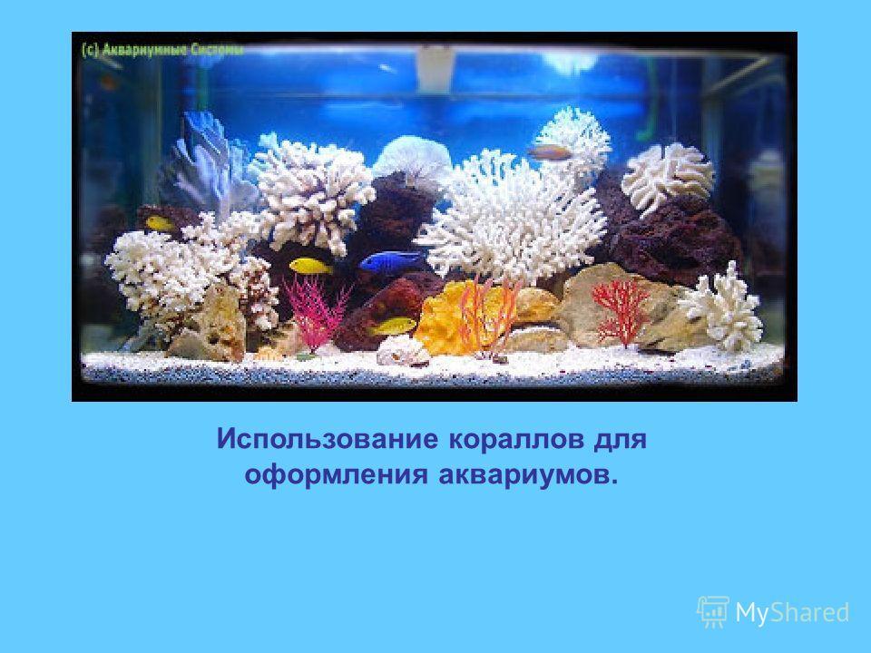 Использование кораллов для оформления аквариумов.