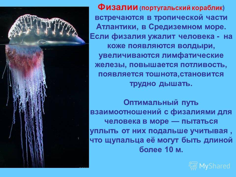 Физалии ( португальский кораблик) встречаются в тропической части Атлантики, в Средиземном море. Если физалия ужалит человека - на коже появляются волдыри, увеличиваются лимфатические железы, повышается потливость, появляется тошнота,становится трудн