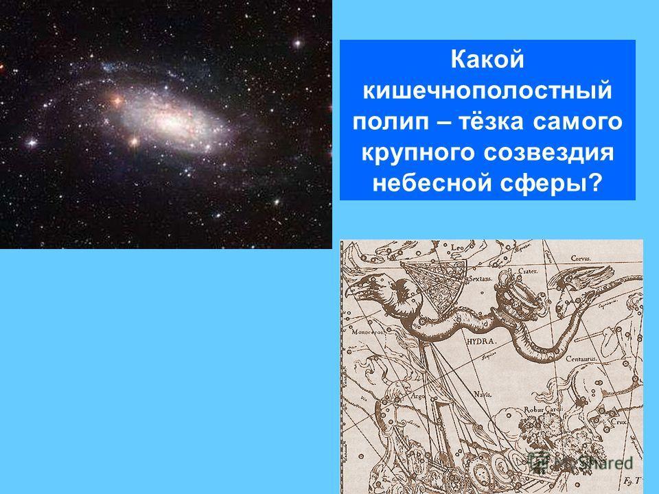 Какой кишечнополостный полип – тёзка самого крупного созвездия небесной сферы?