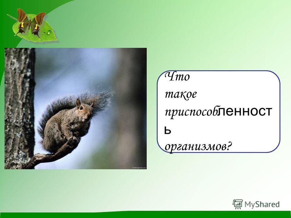 Что такое приспособ ленност ь организмов?