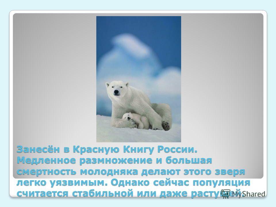 Занесён в Красную Книгу России. Медленное размножение и большая смертность молодняка делают этого зверя легко уязвимым. Однако сейчас популяция считается стабильной или даже растущей.