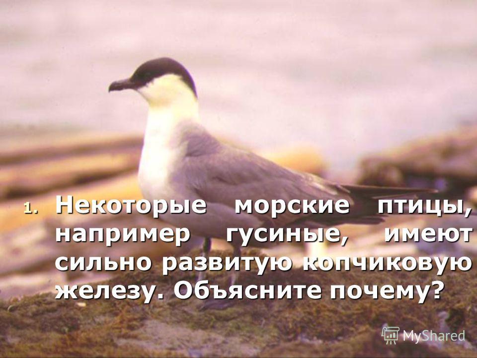 1. Некоторые морские птицы, например гусиные, имеют сильно развитую копчиковую железу. Объясните почему?