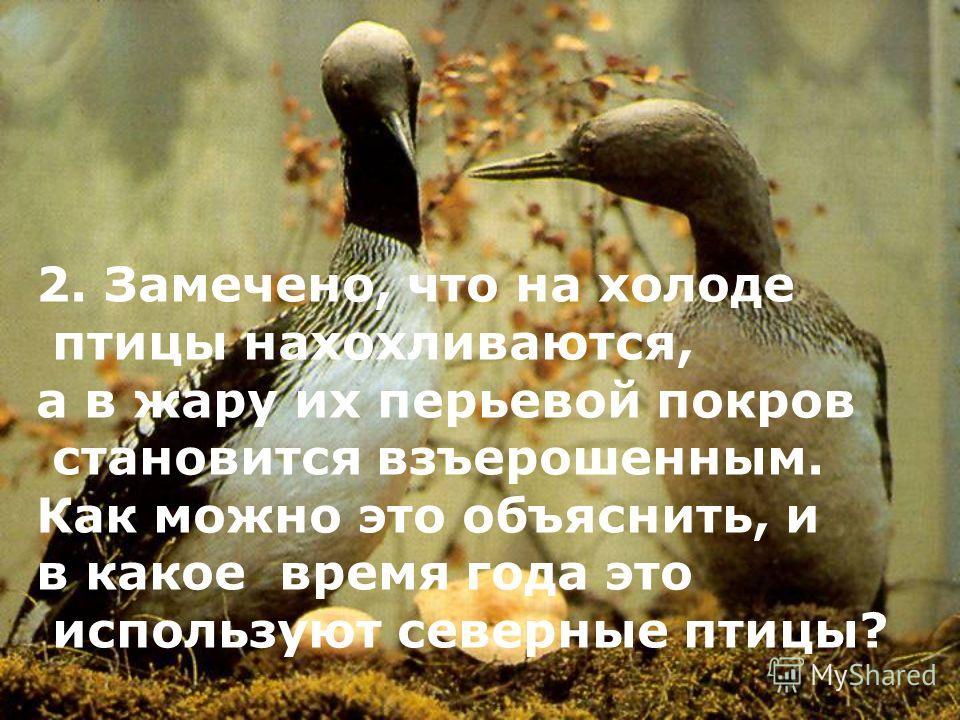 2. Замечено, что на холоде птицы нахохливаются, а в жару их перьевой покров становится взъерошенным. Как можно это объяснить, и в какое время года это используют северные птицы?