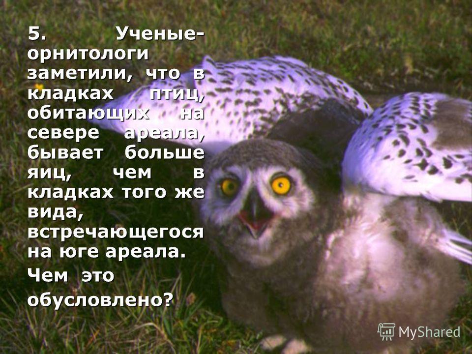 5. Ученые- орнитологи заметили, что в кладках птиц, обитающих на севере ареала, бывает больше яиц, чем в кладках того же вида, встречающегося на юге ареала. 5. Ученые- орнитологи заметили, что в кладках птиц, обитающих на севере ареала, бывает больше