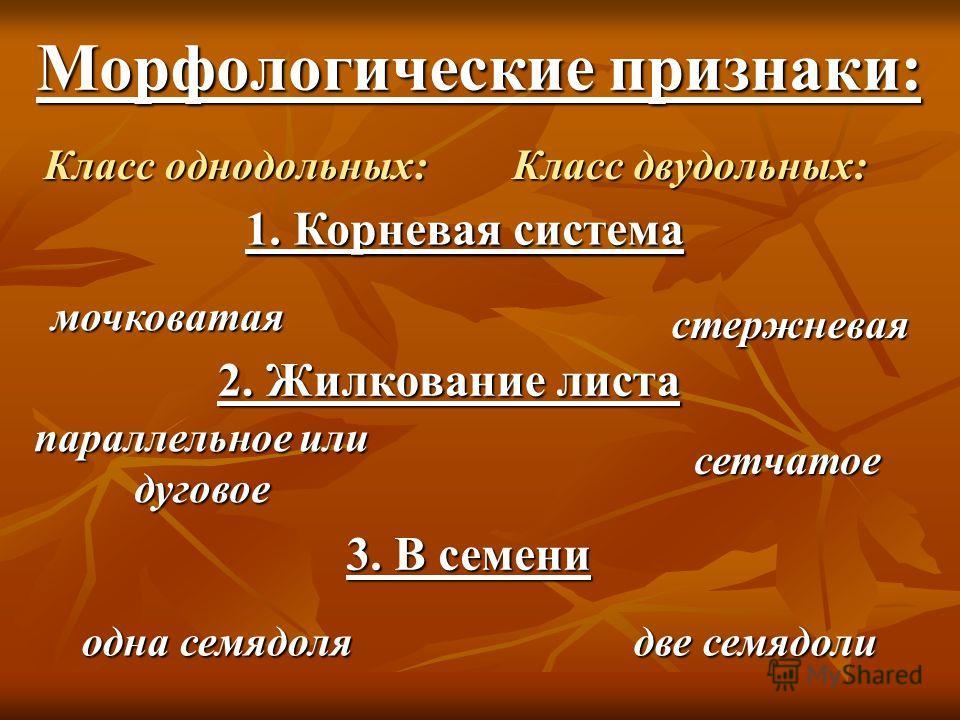 Морфологические признаки: Класс однодольных:Класс двудольных: 1. Корневая система 2. Жилкование листа 3. В семени мочковатая стержневая параллельное или дуговое сетчатое одна семядолядве семядоли