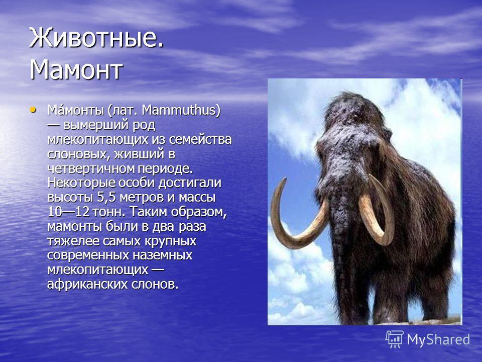 Животные. Мамонт Ма́монты (лат. Mammuthus) вымерший род млекопитающих из семейства слоновых, живший в четвертичном периоде. Некоторые особи достигали высоты 5,5 метров и массы 1012 тонн. Таким образом, мамонты были в два раза тяжелее самых крупных со
