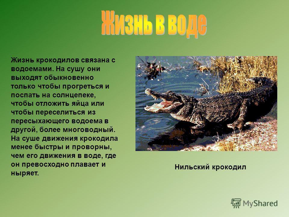 Жизнь крокодилов связана с водоемами. На сушу они выходят обыкновенно только чтобы прогреться и поспать на солнцепеке, чтобы отложить яйца или чтобы переселиться из пересыхающего водоема в другой, более многоводный. На суше движения крокодила менее б