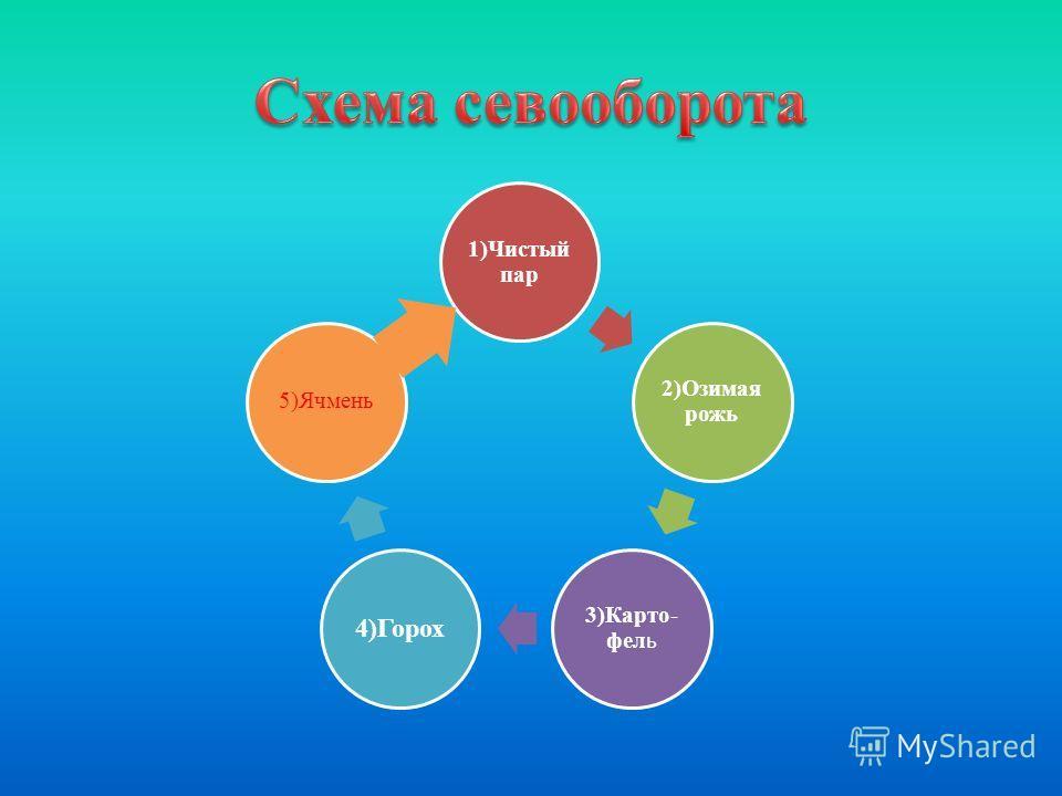 1)Чистый пар 2)Озимая рожь 3)Карто- фел ь 4)Горох 5)Ячмень