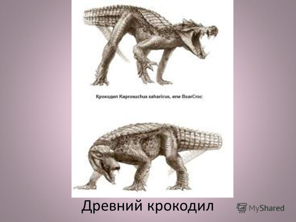 Древний крокодил