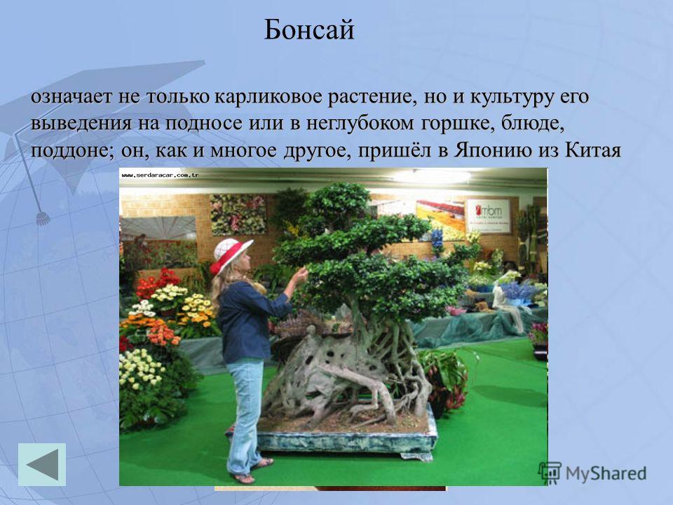 Бонсай означает не только карликовое растение, но и культуру его выведения на подносе или в неглубоком горшке, блюде, поддоне; он, как и многое другое, пришёл в Японию из Китая