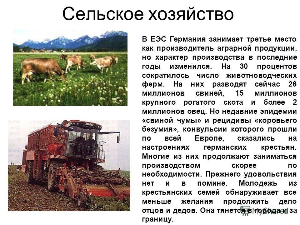 Сельское хозяйство В ЕЭС Германия занимает третье место как производитель аграрной продукции, но характер производства в последние годы изменился. На 30 процентов сократилось число животноводческих ферм. На них разводят сейчас 26 миллионов свиней, 15