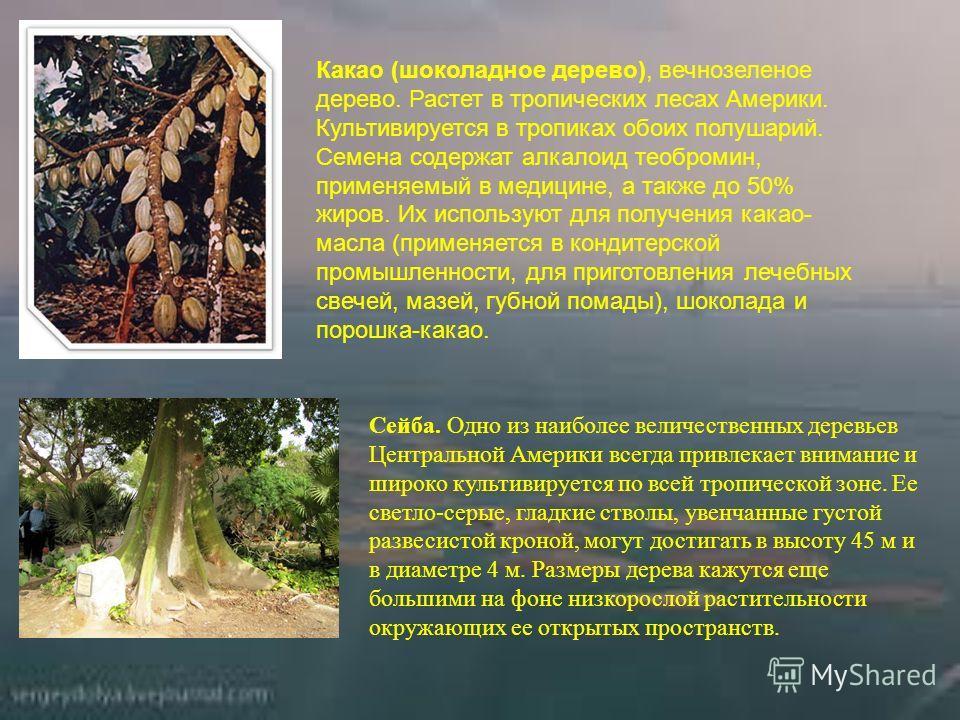 Какао (шоколадное дерево), вечнозеленое дерево. Растет в тропических лесах Америки. Культивируется в тропиках обоих полушарий. Семена содержат алкалоид теобромин, применяемый в медицине, а также до 50% жиров. Их используют для получения какао- масла