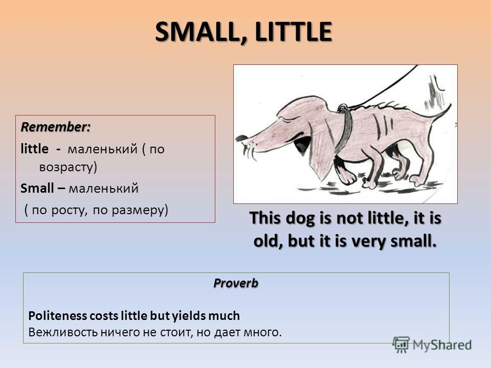 SMALL, LITTLE Remember: little - маленький ( по возрасту) Small – маленький ( по росту, по размеру) Proverb Politeness costs little but yields much Вежливость ничего не стоит, но дает много. This dog is not little, it is old, but it is very small.