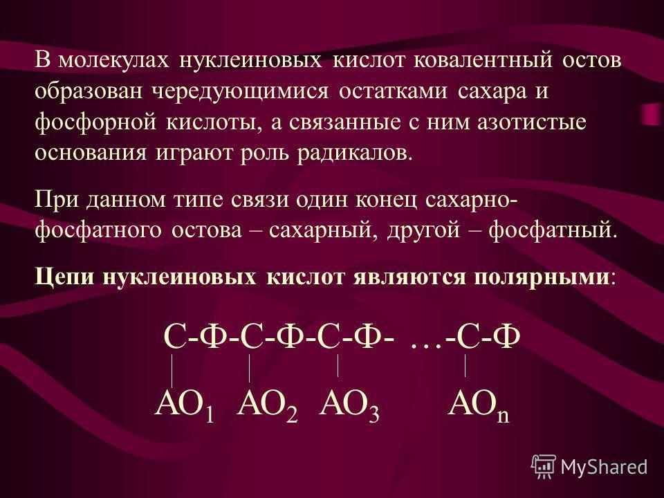 В молекулах нуклеиновых кислот ковалентный остов образован чередующимися остатками сахара и фосфорной кислоты, а связанные с ним азотистые основания играют роль радикалов. При данном типе связи один конец сахарно- фосфатного остова – сахарный, другой