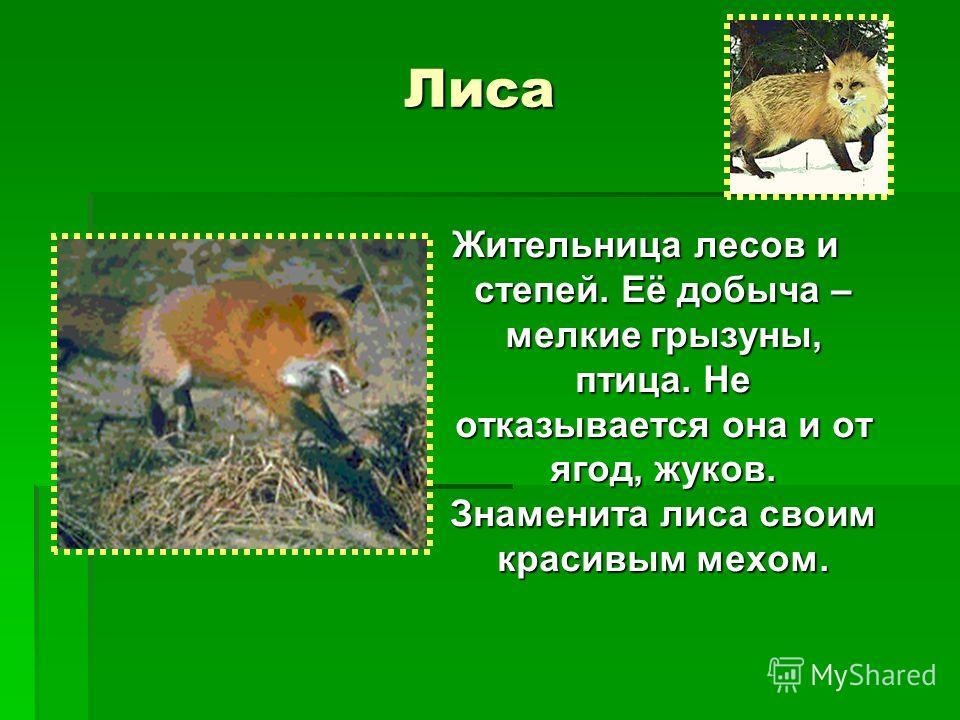 Лиса Жительница лесов и степей. Её добыча – мелкие грызуны, птица. Не отказывается она и от ягод, жуков. Знаменита лиса своим красивым мехом.