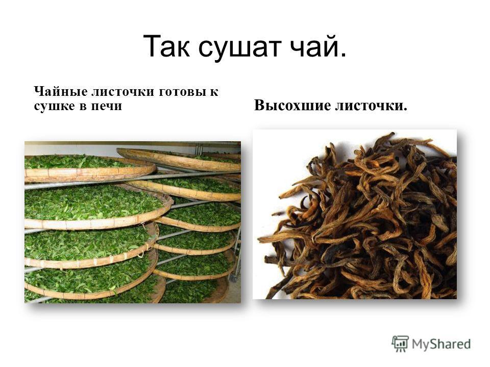 Так сушат чай. Чайные листочки готовы к сушке в печи Высохшие листочки.
