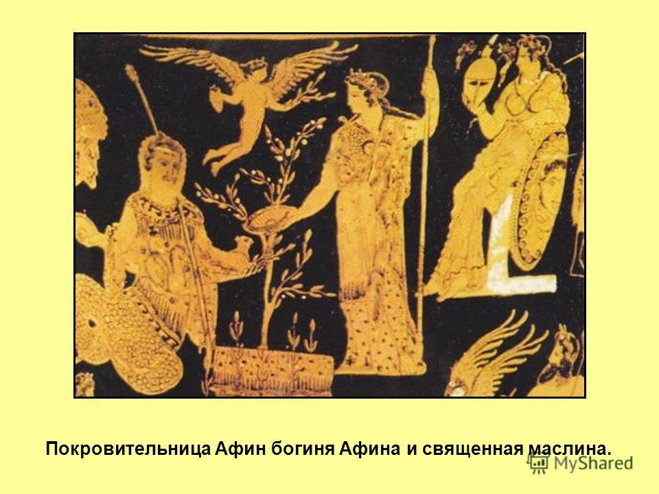 Покровительница Афин богиня Афина и священная маслина.