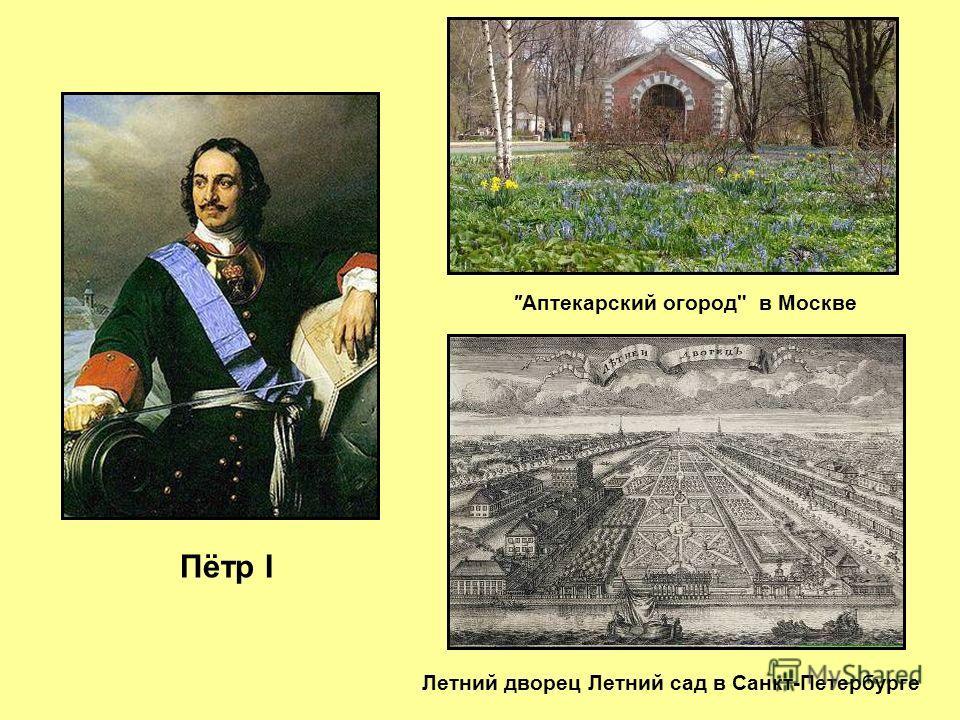 Аптекарский огород в Москве Летний дворец Летний сад в Санкт-Петербурге Пётр I