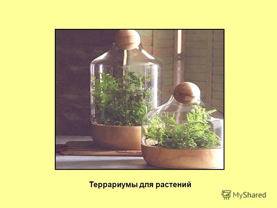 Террариумы для растений