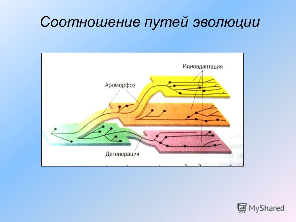 Соотношение путей эволюции