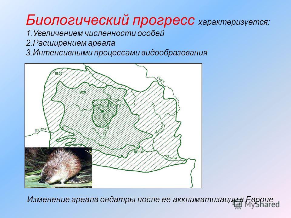 Биологический прогресс характеризуется: 1.Увеличением численности особей 2.Расширением ареала 3.Интенсивными процессами видообразования Изменение ареала ондатры после ее акклиматизации в Европе