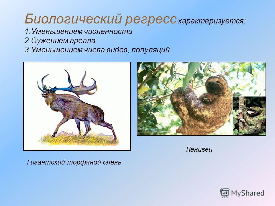 Биологический регресс характеризуется: 1.Уменьшением численности 2.Сужением ареала 3.Уменьшением числа видов, популяций Гигантский торфяной олень Ленивец
