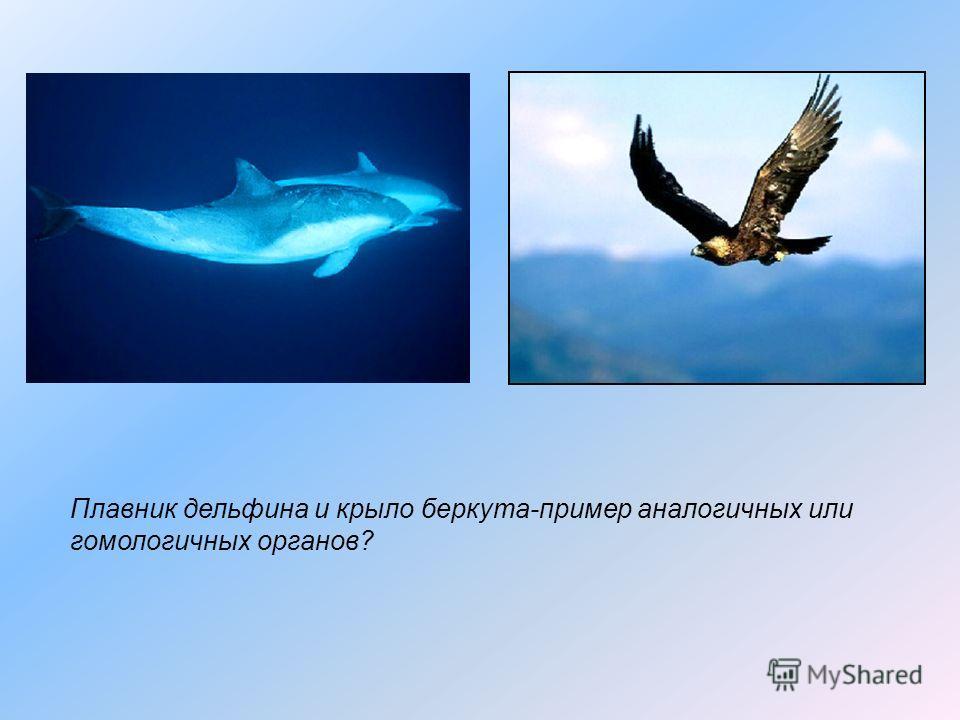 Плавник дельфина и крыло беркута-пример аналогичных или гомологичных органов?