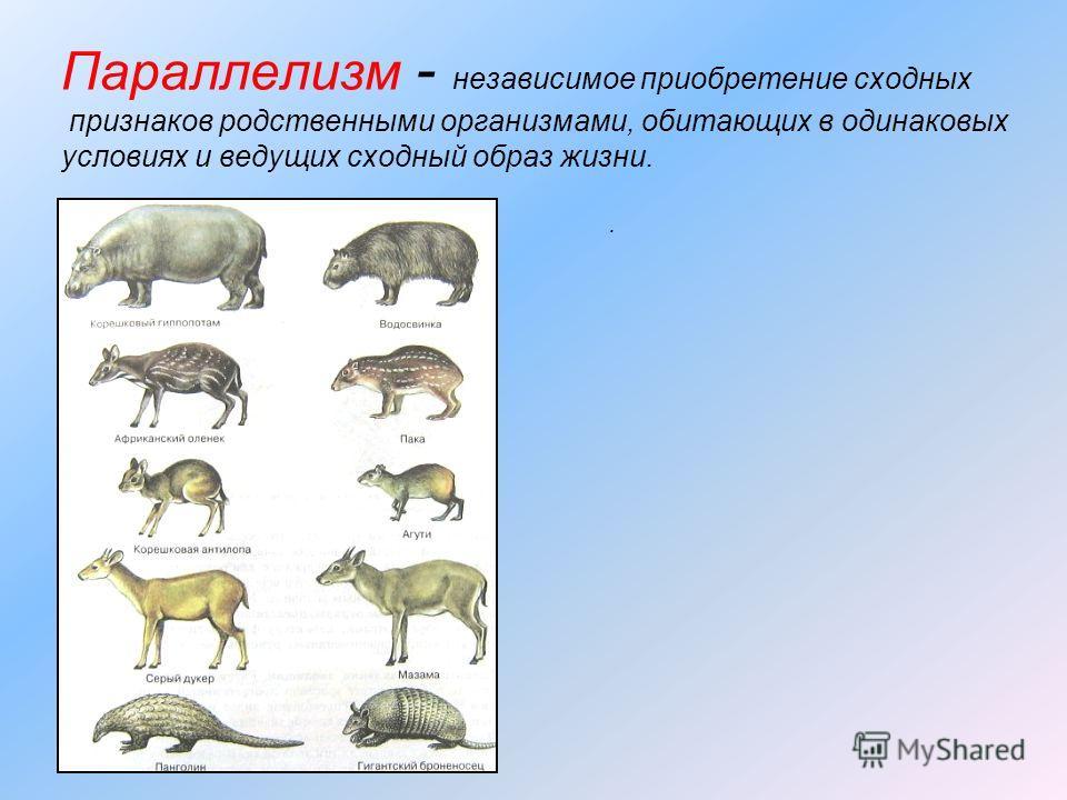 Параллелизм - независимое приобретение сходных признаков родственными организмами, обитающих в одинаковых условиях и ведущих сходный образ жизни..