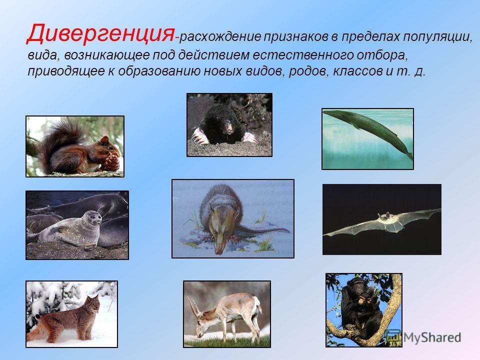 Дивергенция -расхождение признаков в пределах популяции, вида, возникающее под действием естественного отбора, приводящее к образованию новых видов, родов, классов и т. Д.