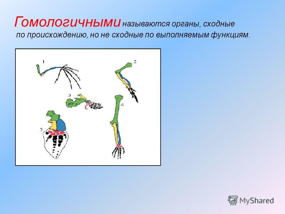 Гомологичными называются органы, сходные по происхождению, но не сходные по выполняемым функциям.