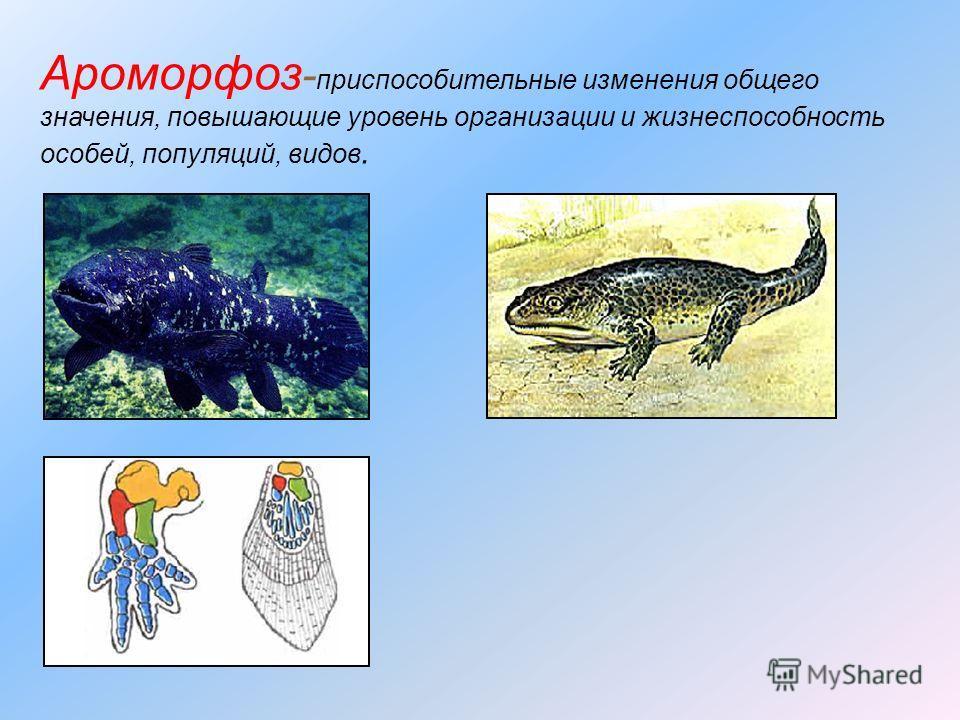 Ароморфоз - приспособительные изменения общего значения, повышающие уровень организации и жизнеспособность особей, популяций, видов.