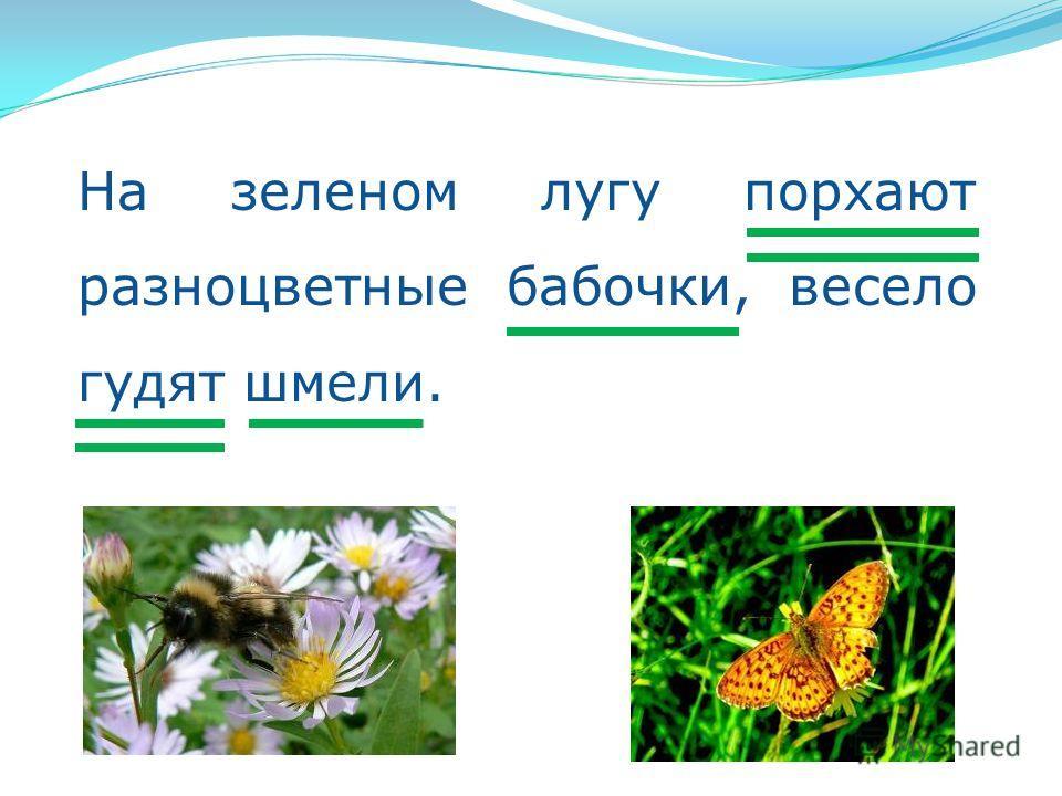 На зеленом лугу порхают разноцветные бабочки, весело гудят шмели.