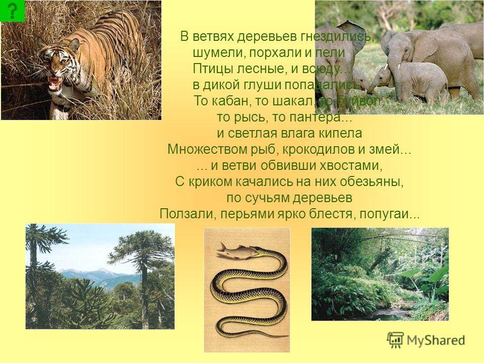 В ветвях деревьев гнездились, шумели, порхали и пели Птицы лесные, и всюду... в дикой глуши попадались То кабан, то шакал, то буйвол, то рысь, то пантера... и светлая влага кипела Множеством рыб, крокодилов и змей...... и ветви обвивши хвостами, С кр