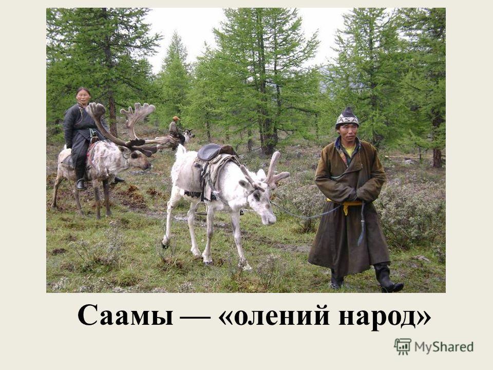 Саамы «олений народ»