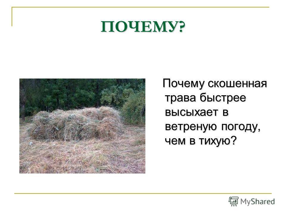 ПОЧЕМУ? Почему скошенная трава быстрее высыхает в ветреную погоду, чем в тихую? Почему скошенная трава быстрее высыхает в ветреную погоду, чем в тихую?