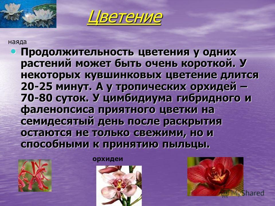 Цветение Продолжительность цветения у одних растений может быть очень короткой. У некоторых кувшинковых цветение длится 20-25 минут. А у тропических орхидей – 70-80 суток. У цимбидиума гибридного и фаленопсиса приятного цветки на семидесятый день пос