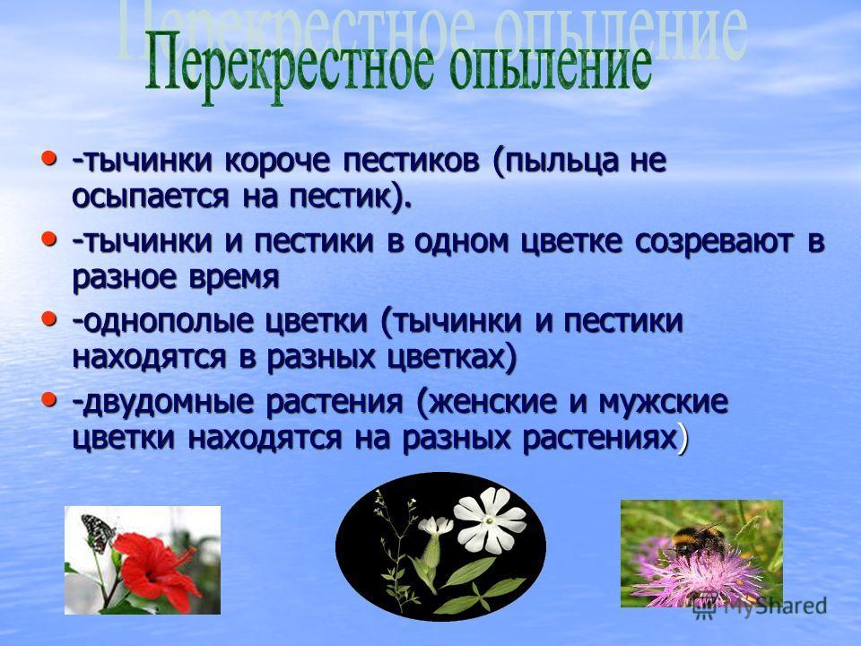 -тычинки короче пестиков (пыльца не осыпается на пестик). -тычинки короче пестиков (пыльца не осыпается на пестик). -тычинки и пестики в одном цветке созревают в разное время -тычинки и пестики в одном цветке созревают в разное время -однополые цветк