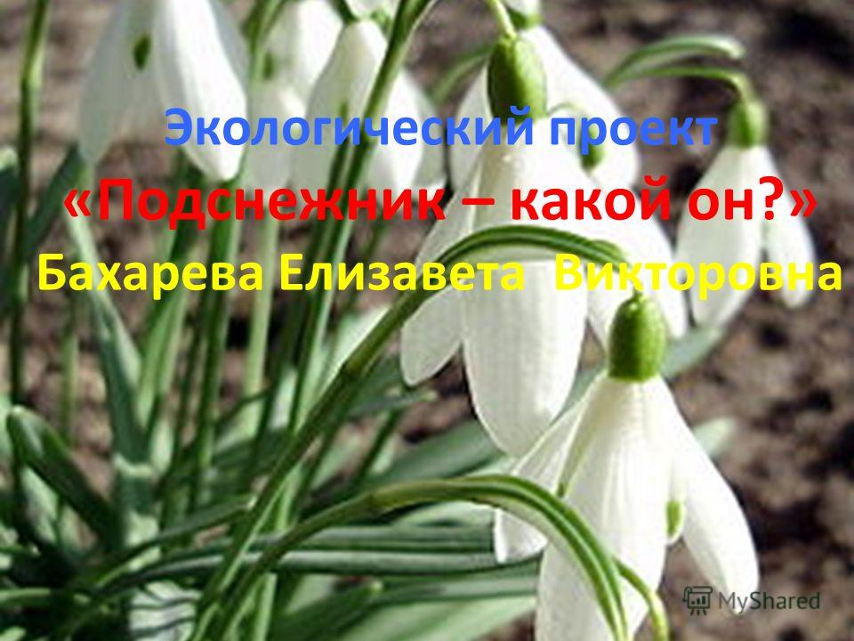 Экологический проект «Подснежник – какой он?» Бахарева Елизавета Викторовна
